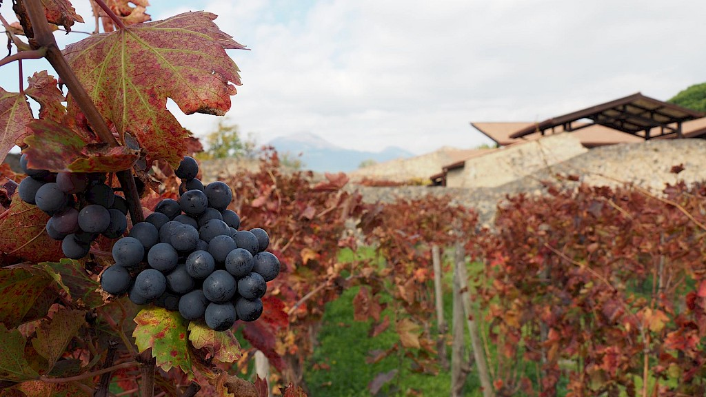 Was ancient wine more alcoholic than modern wine?
